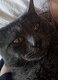Пропал кот Kryvyy Rih
