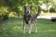 Отдам в хорошие руки красивого крупного пса Пола Kiev