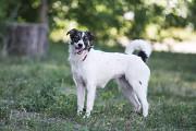Отдам в хорошие руки собаку (подростка) девочку Рейни Kiev
