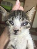 Помогите котятам вылечить глазки! from Dnipro