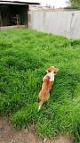 Пропала собака Kramators'k