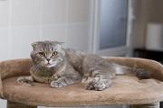 Отдам в хорошие руки молодого котика Бонифака Kiev