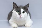 Отдам в хорошие руки молодого котика Рикки Kiev