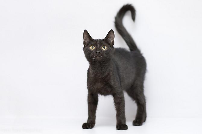 Отдам в хорошие руки котенка мальчика Гаса Kiev - photo 1