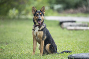 Отдам в хорошие руки молодую собаку Лейки Kiev