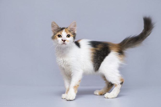 Отдам в хорошие руки котенка девочку Рьяну Kiev - photo 1