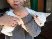 Отдам котят в хорошие руки Kherson