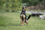 Отдам в хорошие руки молодую жизнерадостную собаку Чупси Kiev
