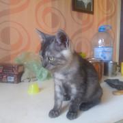 сестрички-котята, м. Черниговская Kiev