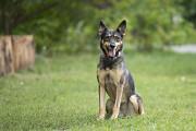 Отдам в хорошие руки прекрасную собаку Зиту Kiev