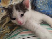 Отдам замечательных котят в добрые руки Minsk