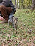 Найден кот Vitebsk