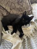 Віддам кошенят Zolotonosha
