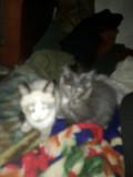 Отдам даром котят Kostanay