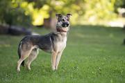 Отдам в хорошие руки Плейси, молодую собаку с приятным характером Kiev