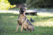 Отдам в хорошие руки умнейшую молодую собаку Палому Kiev