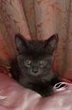 Отдам котика в добрые руки Svyetlahorsk