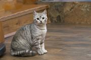 Отдам в хорошие руки котенка девочки Хуффи Kiev